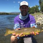 "The Purple Drift- to benefit Pancreatic Cancer awareness.  19"" Brown Trout, Yellowstone River near Bozeman Montana."