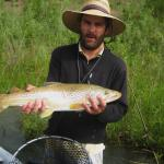 "27"" Brown trout on the Madison river in southwest Montana"