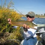 "27"" Brown trout released near Missouri Headwaters State Park in southwest Montana"