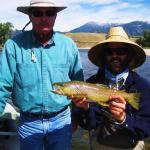 Wild Brown trout on the Yellowstone river in Montana